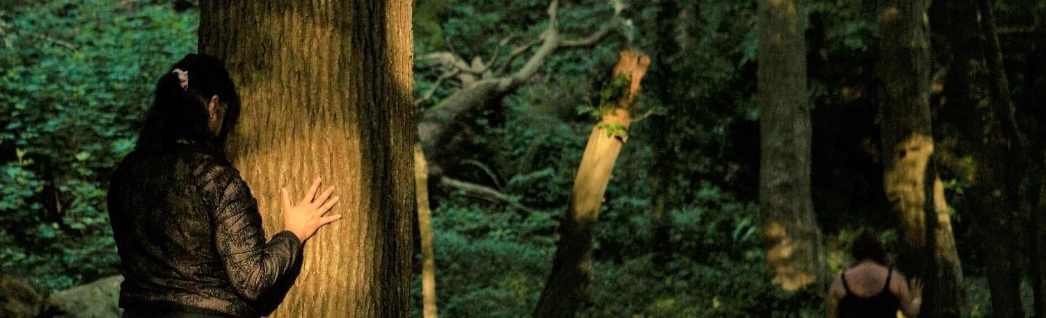 Sylvothérapie - Bains de forêt